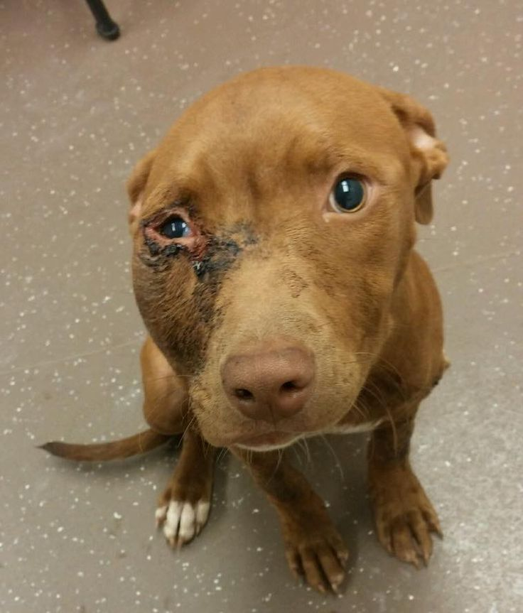 Dog Rescue South Bend Indiana