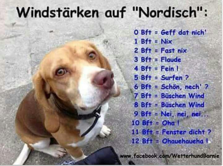 Die besten 17 bilder zu typisch norddeutsch auf pinterest - Hamburg zitate ...
