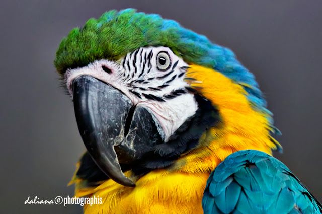 Photographis: The Parrot