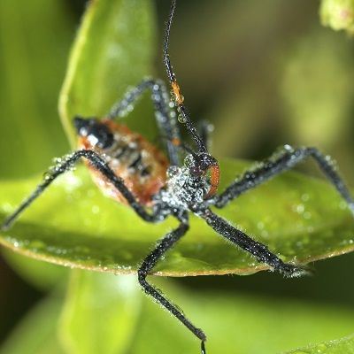 Mike the Gardener   Not All Bugs in Your Home Vegetable Garden are Bad   #prepbloggers #bugs