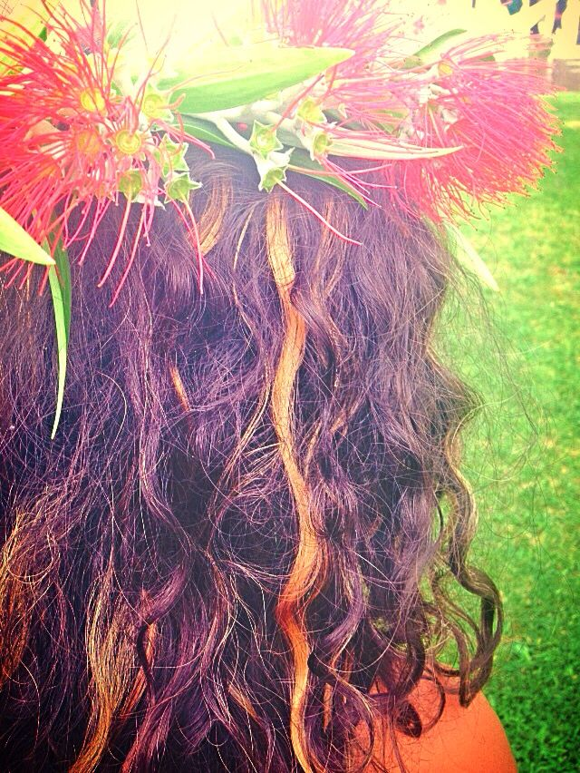 Pohutukawa crown for summer solstice