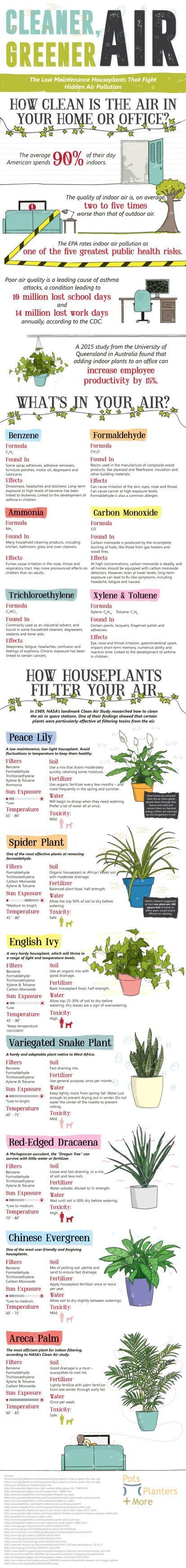 Best 25 air pollution ideas on pinterest environmental for Pollution fighting plants