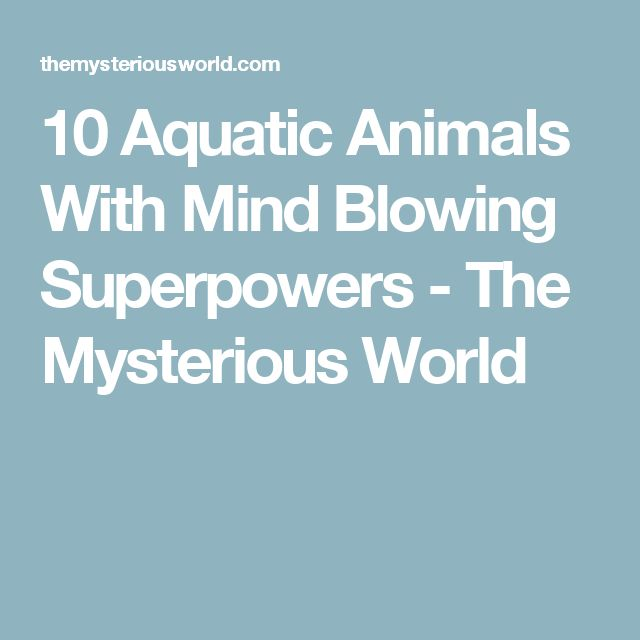 10 Aquatic Animals With Mind Blowing Superpowers - The Mysterious World