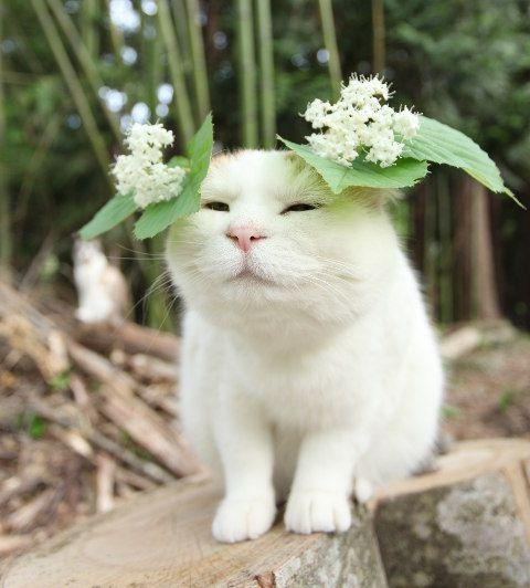 がまずみの花
