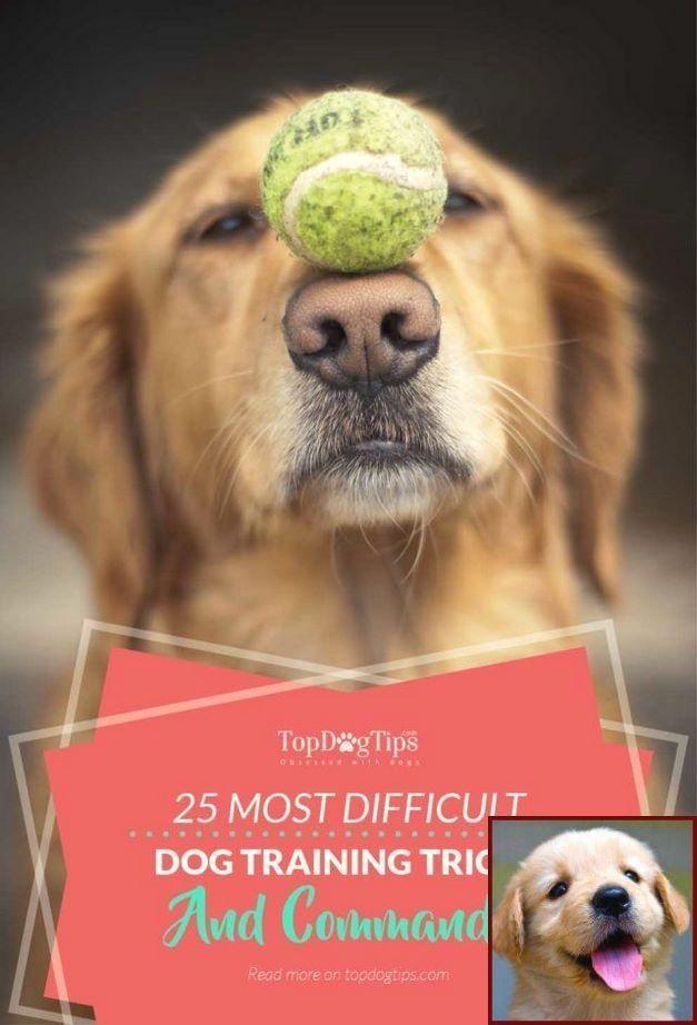 Dog Behavior Training Books And Dog Training Courses Aberdeen