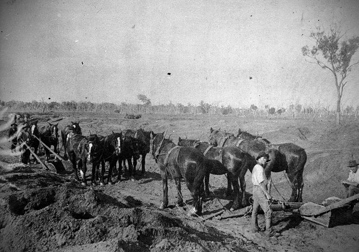 Horse Drawn Road Making, Bendigo, Victoria, circa 1915. Workers of the Bendigo Country Roads Board constructing a road. They are using horse-drawn scoops.