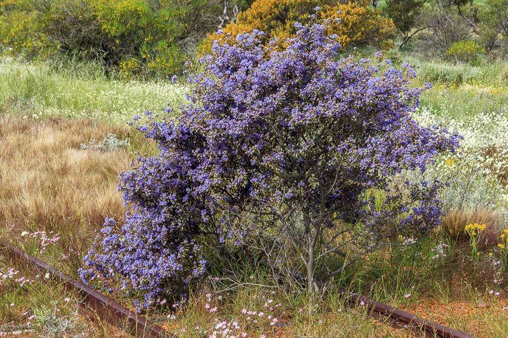 Western Australia's Wild Flowers - Neil Rendell Photography