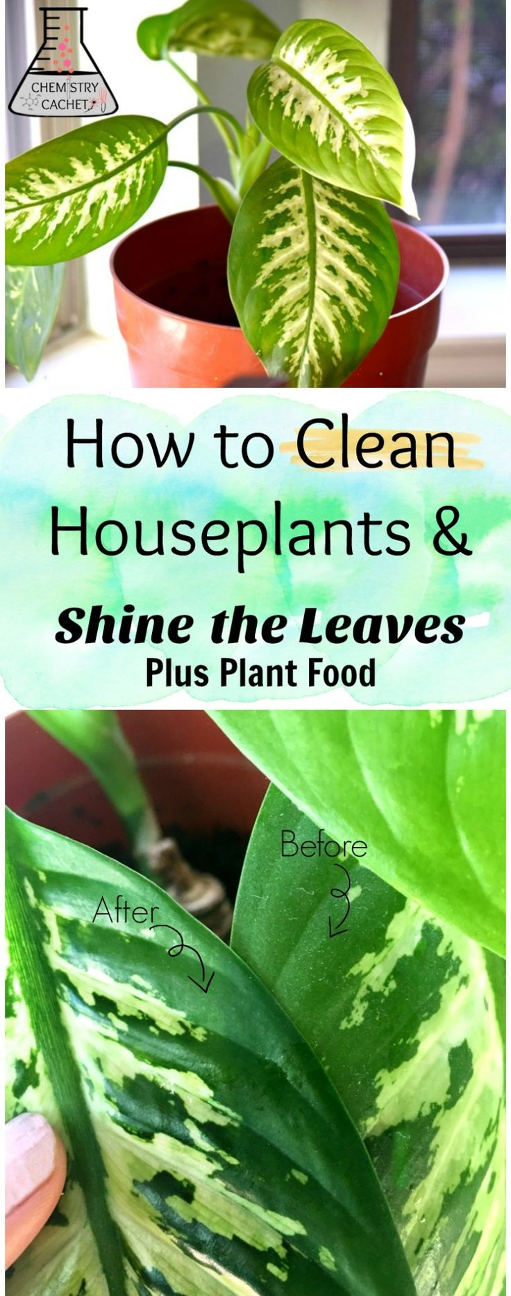 17 Best Ideas About Plant Leaves On Pinterest House