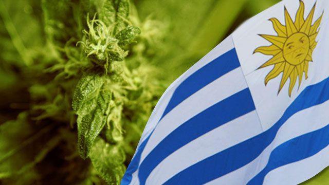 The Cannabis Republic of Uruguay #video #weed #uruguay