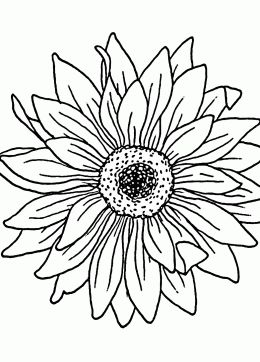 Sunflower coloring page for kids flower coloring pages
