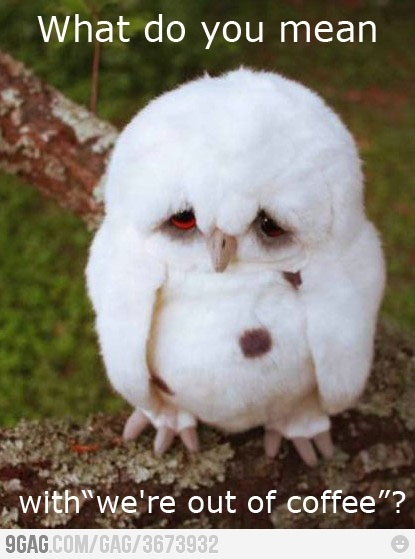 First owl problems