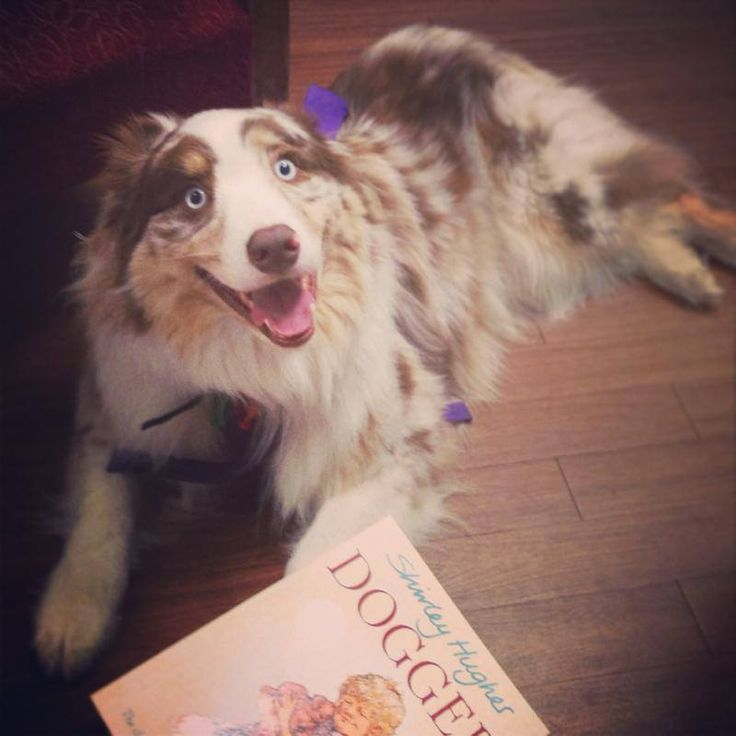We love canine visitors, and they love Dogger!
