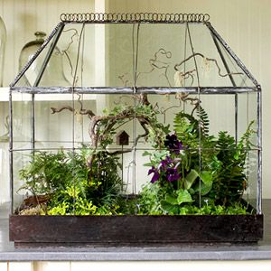 antique terrarium planted with flowering cape primrose, rabbit's-foot fern, golden club moss, black and dwarf mondo grass, variegated ivy, angel's tears, and kenilworth ivy.