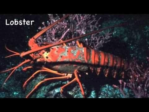 Abc's of the Ocean Video Clip - Ocean study