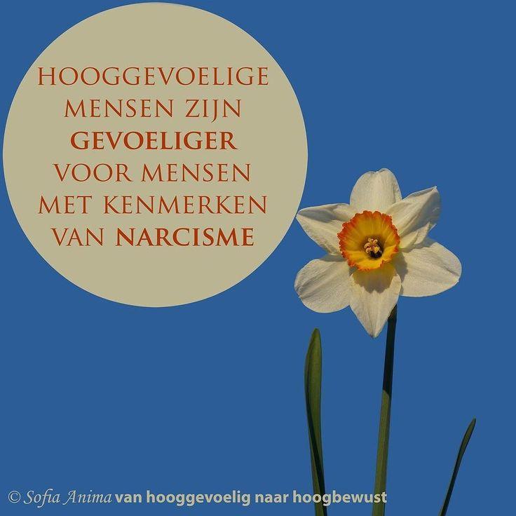 NARCISME EN HOOGGEVOELIGHEID =================================== Mensen met narcisme (of narcistische kenmerken) en hooggevoelige mensen hebben 1 ding gemeen: onzekerheid. Maar zullen dit anders uiten. . Hooggevoelige mensen proberen zich veelal onzichtbaar(der) te maken en geven soms een ander meer credits en waarde dan zichzelf en stellen zich daardoor vaak dienstbaar op. Iemand met narcisme (of kenmerken ervan) zoekt juist de aandacht en bevestiging van wie hij/zij is bij wat een ander…
