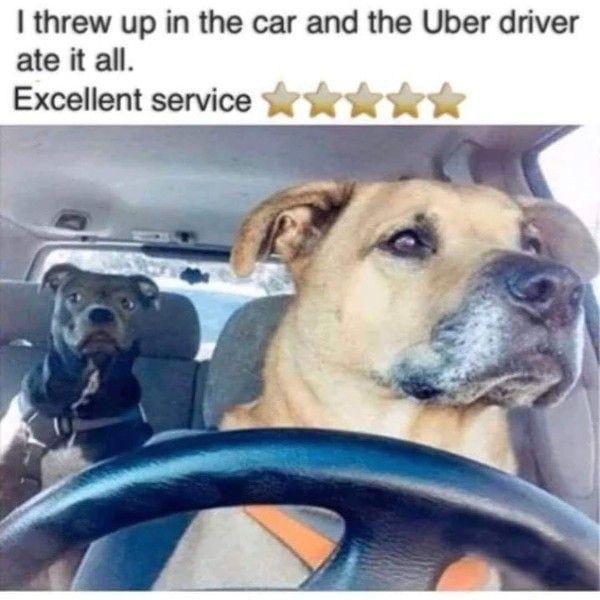 F Ck Lyft With Images Funny Animal Memes Funny Dog Memes Animal Memes