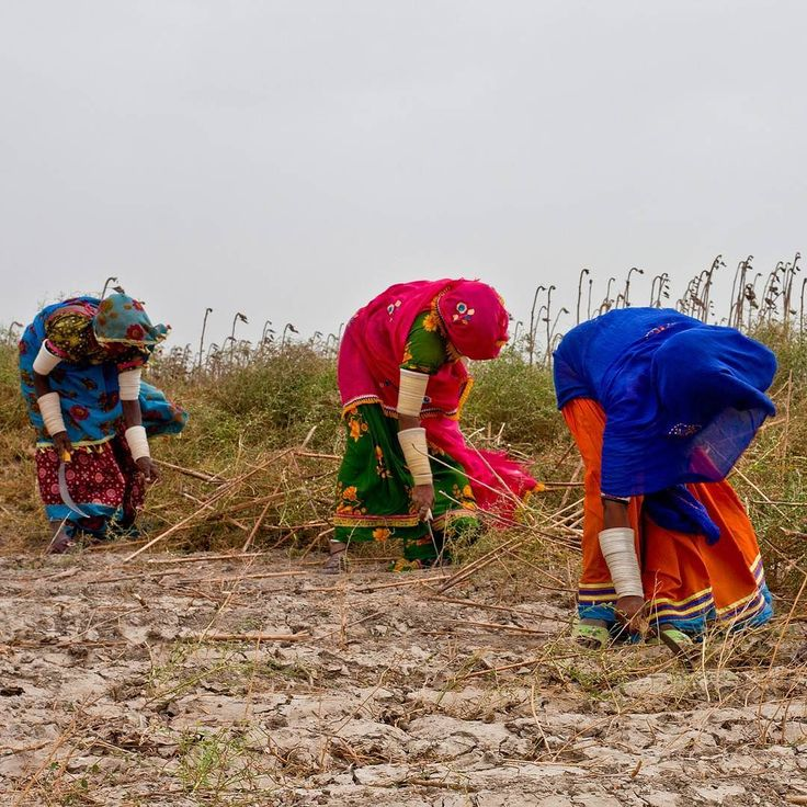 "Gender and Climate Change: Putting Food on the Table ""Women farmers account for 45-80% of food production in the developing world depending on region their food and job security are threatened by climate change."" 