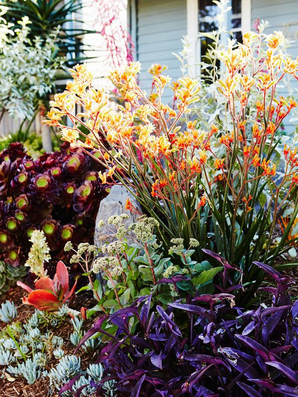 There are no rules in this garden, natives mix with succulents, grasses, and Mediterranean plants, and colour is king! Photo – Annette O'Brien for The Design Files.