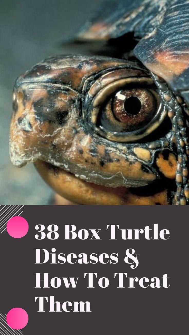 38 box turtle diseases how to treat them box turtle