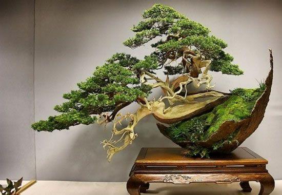 Amazing bonsai tree, wow