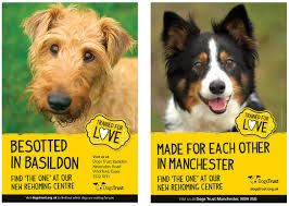 Image result for dogs trust