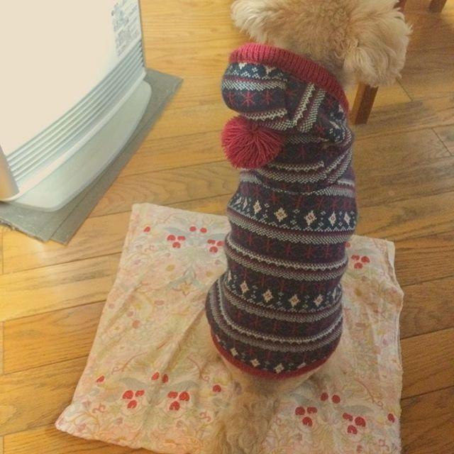 ・ \ クッキー、ここあったかいの知ってるもん。/ ・ ・ 冬の特等席です☃️❄️ ・ ストーブついてなくてもここにいるときあるかわいい(笑) ・ ・ #mydog #mydoglove #lovedog #doglove #myfamily #socute #lovemyfamily #dogstagram #instadog #dogpic #terrier #テリア #テリア犬 #テリアミックス #ミックス犬 #レイクランドテリア #ワイヤーフォックステリア #愛犬 #イヌ #いぬ #犬 #愛犬家 #愛犬ら部 #犬部 #犬バカ部 #ストーブ #ストーブ犬 #ストー部 #おすわり #姿勢いい (笑)