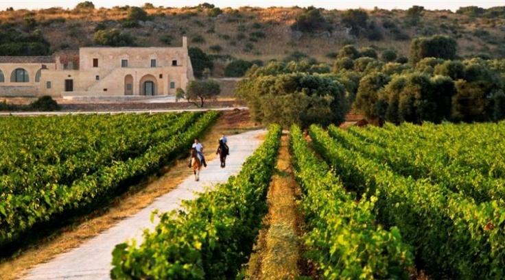 Horseback riding among the vineyards