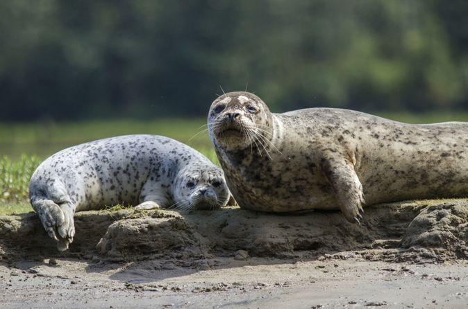 Snorkeling with Seals in Nanaimo from Vancouver - Lonely Planet