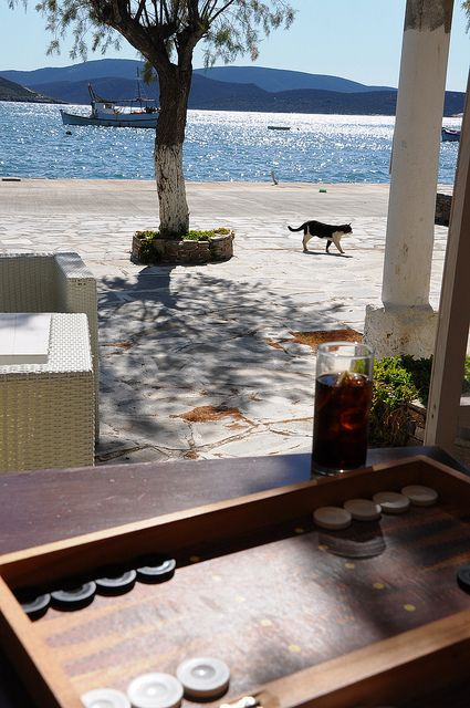 Gato de la playa de Evia Grecia.