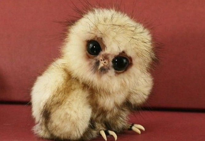 Very+Cute+Baby+Animal | Ugly baby animals, yet very cute | haha.nu
