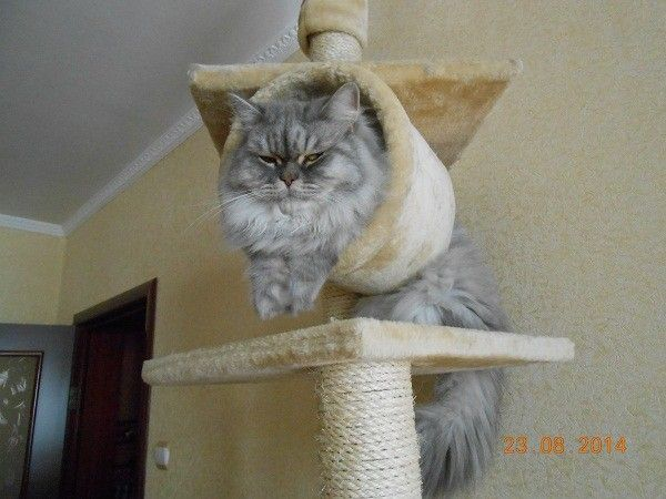 161 best images about cat tree on pinterest trees cats for Design your own cat tree