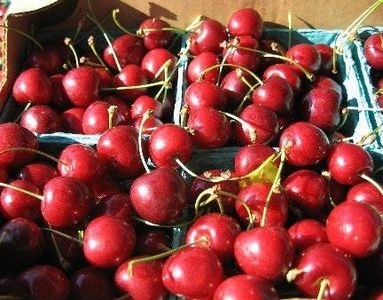 Health Benefits of Tart Cherry Juice Concentrate