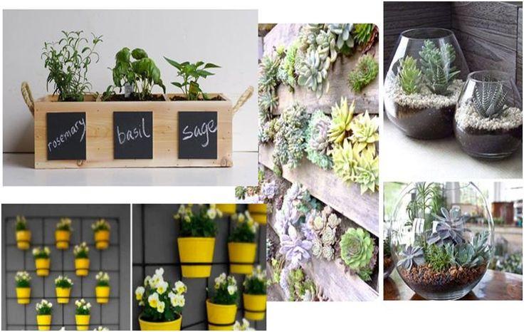 Who doesn't LOVE a herb garden or Terrarium!