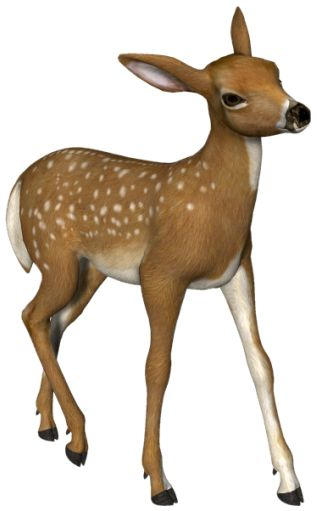 Small Roe deer 3D PNG Picture