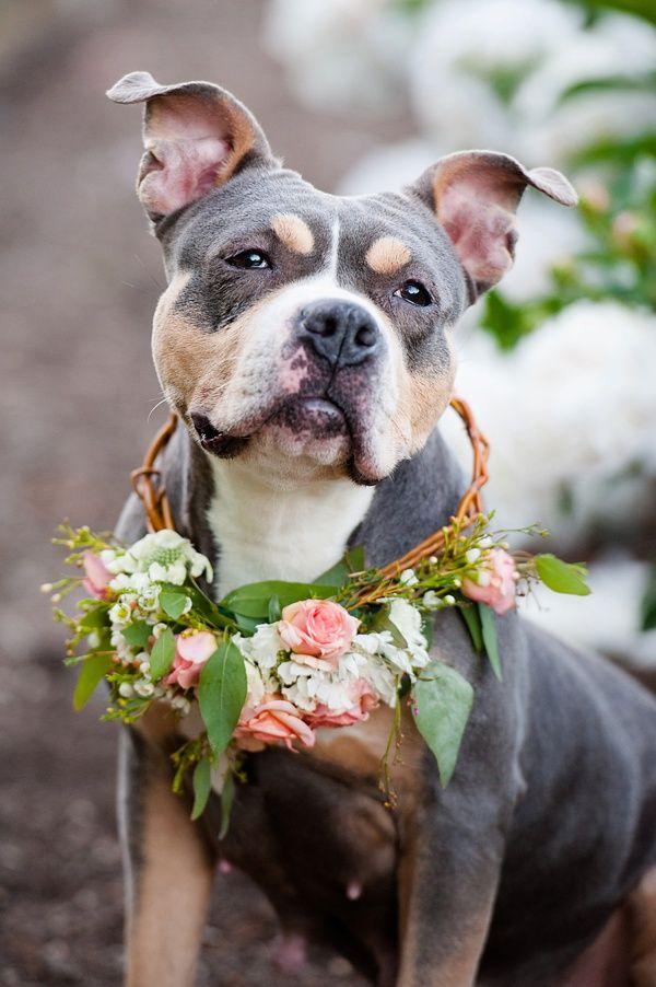 © Jenny Karlsson Photography | beautiful pit bull wearing wreath of flowers, lifestyle pet photography