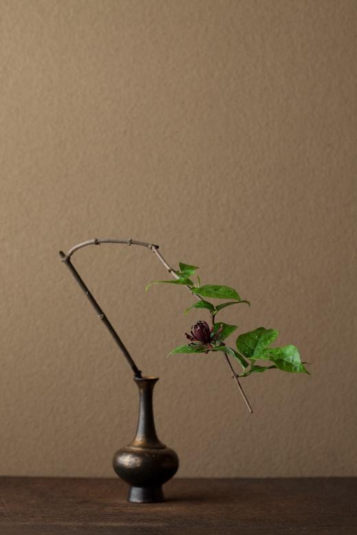 一日一花 川瀬敏郎  2012年6月27日(水)  黒い花には心の奥をつかむ魅力があります。  花=黒花蝋梅(クロバナロウバイ)  器=金銅華瓶(鎌倉時代)