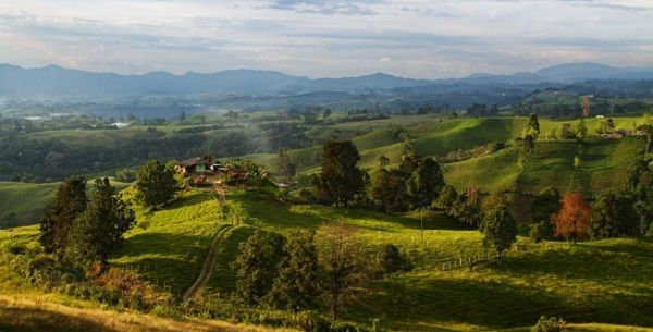 Coffee Triangle, Colombia   colombia4u