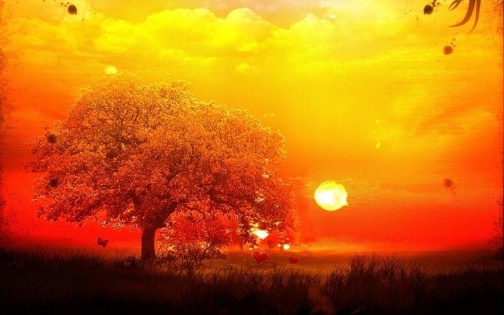 Fantastik Güneş Işığı ve Kalpler Duvar Kağıdı