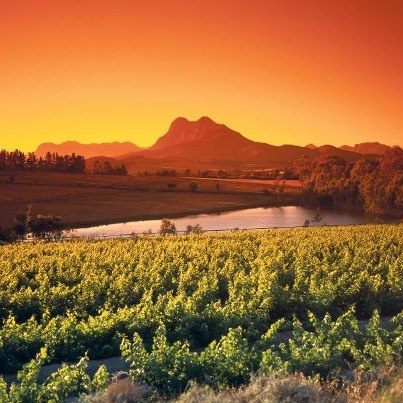 The magnificent Winelands .....