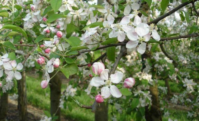 La coopérative agricole Terres du Sud diversifie ses activités en produisant aujourd'hui des jus de raisins et de pommes biologiques.