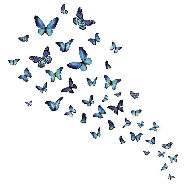 Mariposa Butterfly Wall Decal Butterfly Wall Decals Butterfly
