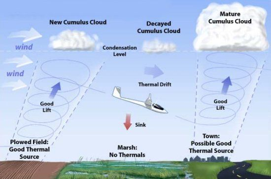Birds and air currents: Thermals