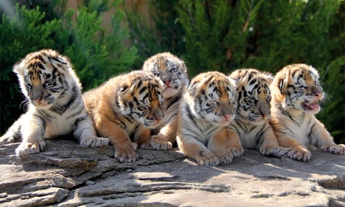Greater Wynne Wood Exotic Animal Park - Greater Wynne Wood Exotic Animal Park…