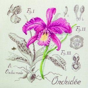 Lin : Étude à l'Orchidée (maxi-grille) à broder au point de croix