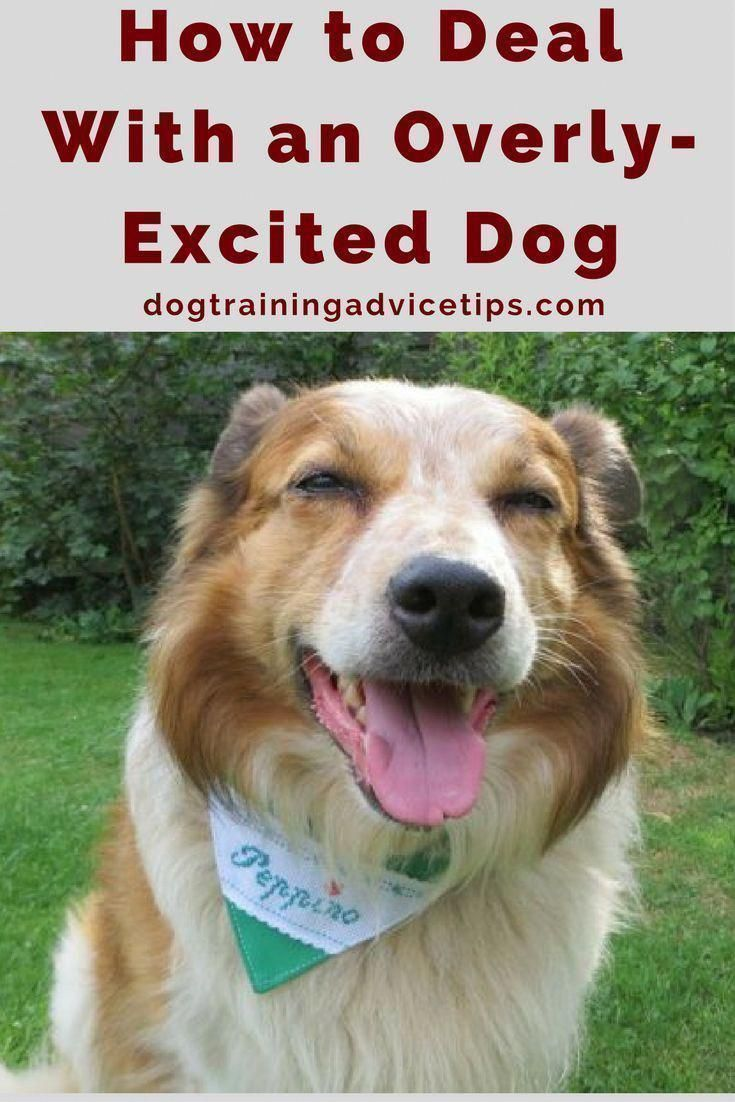 Pin By Karen Whitmore On Dogs Excited Dog Dog Training Advice