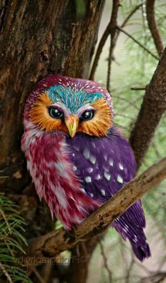 Best 25 Colorful Owl Ideas On Pinterest Paper Cup