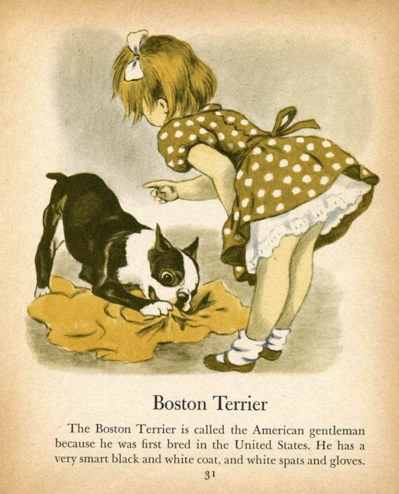 Boston Terrier and Irish Terrier Illustrations by by RoxyRani, $6.00