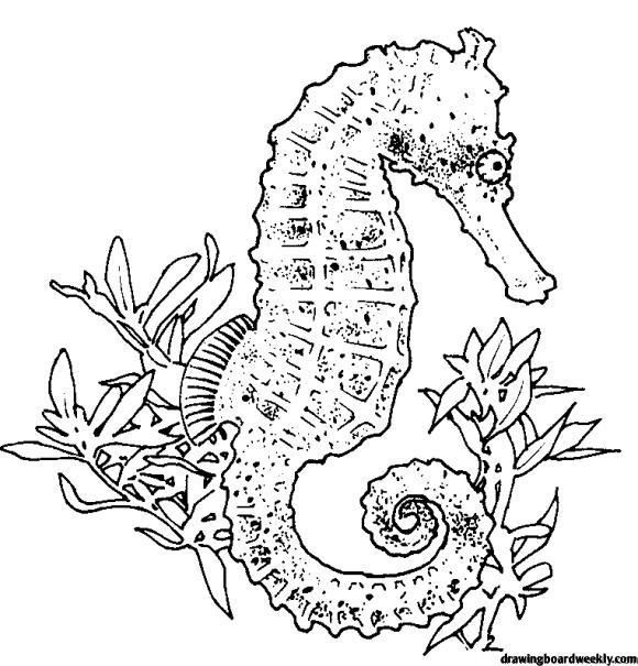 Seahorse Coloring Page Horse Coloring Pages Animal Coloring Pages Horse Coloring