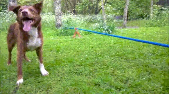 Pets Show Tricks – 15 GIF's