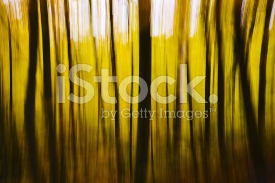 Abstract Blurry Yellow Fall Forest royalty-free stock photo